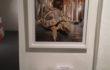 "Maria Rebecca Ballestra – ""Postzoico – Tartaruga"" – stampa lambda cm. 100×70 ed. 2/3 – 2009"