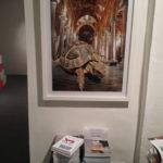 """Maria Rebecca Ballestra - """"Postzoico - Turtle"""" - lambda print cm. 100x70 ed. 2/3 - 2009"""