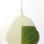 L'orMa, Context, 14x10cm, foglia gelso naturale, carta, vernici