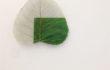 16_L'orMa_40x30cm_intervento manuale su foglia di gelso, resine,colori acrilici, vernici_2015