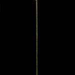 L'orMa_71x40cm_tarassaco intervento manuale_2016